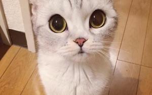Hana, Kucing yang Paling Popular di Instagram Setakat Ini