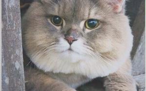 Kenapa Orang Ramai terkejut tengok kucing yang bernama Bone Bone ini