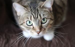 Punca-punca bulu kucing anda gugur
